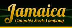 Jamaica Seeds