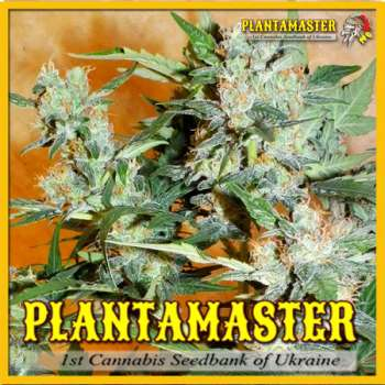 PlantaHaze Auto (Picture from Plantamaster_Seeds..)